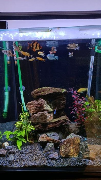 Tropical cubed fish tank with fish and everything else you need